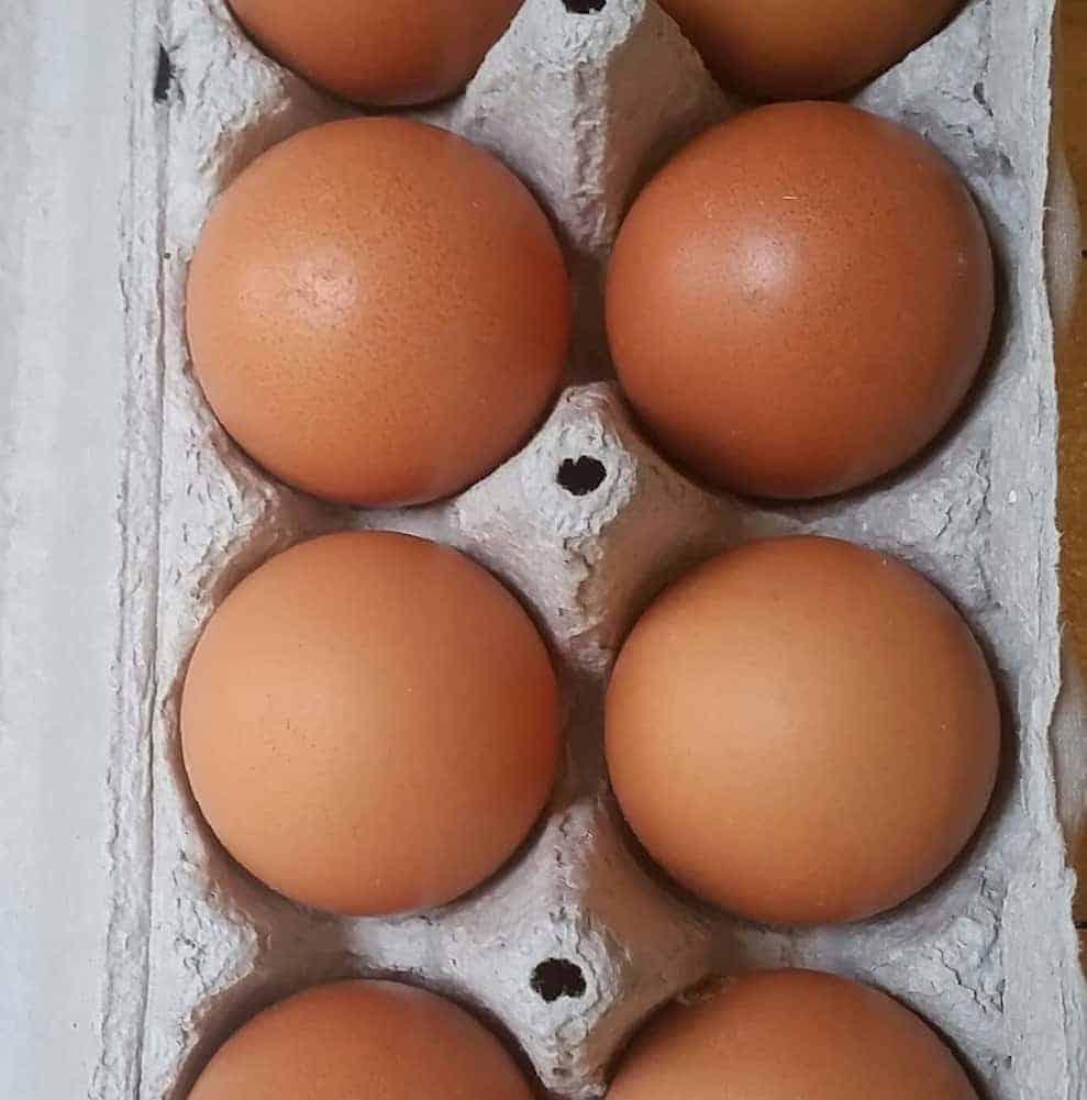 Jumbo eggs (12)