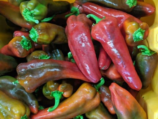 red sheppard peppers