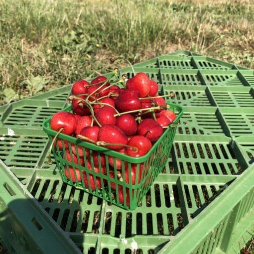 Quart of Cherries