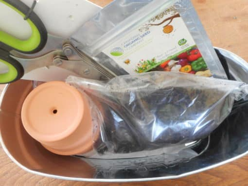 herb starting kit