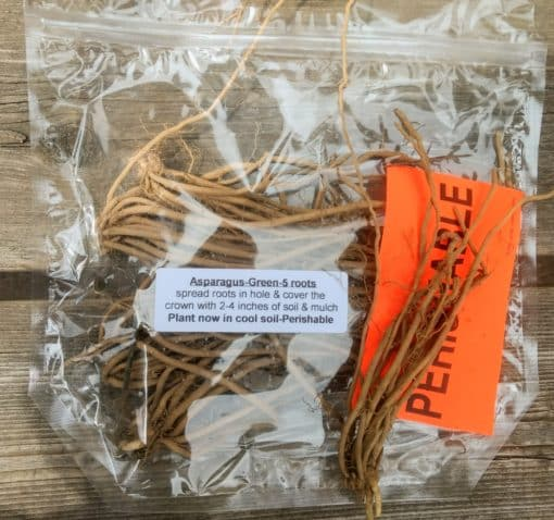 Asparagus roots for planting