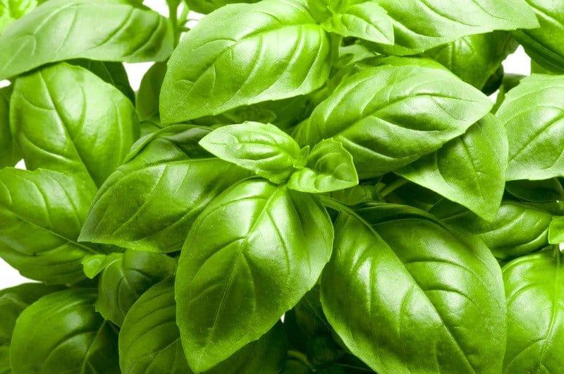 Basil-Organican-75 seeds Sweet Genovese basil for Tomato sauce etc.-multiple disease resistance