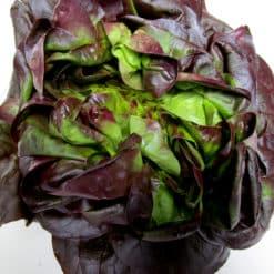 red butter lettuce