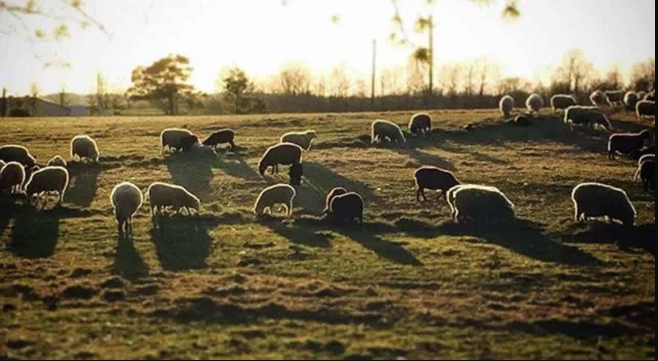 Buschbeck Farms