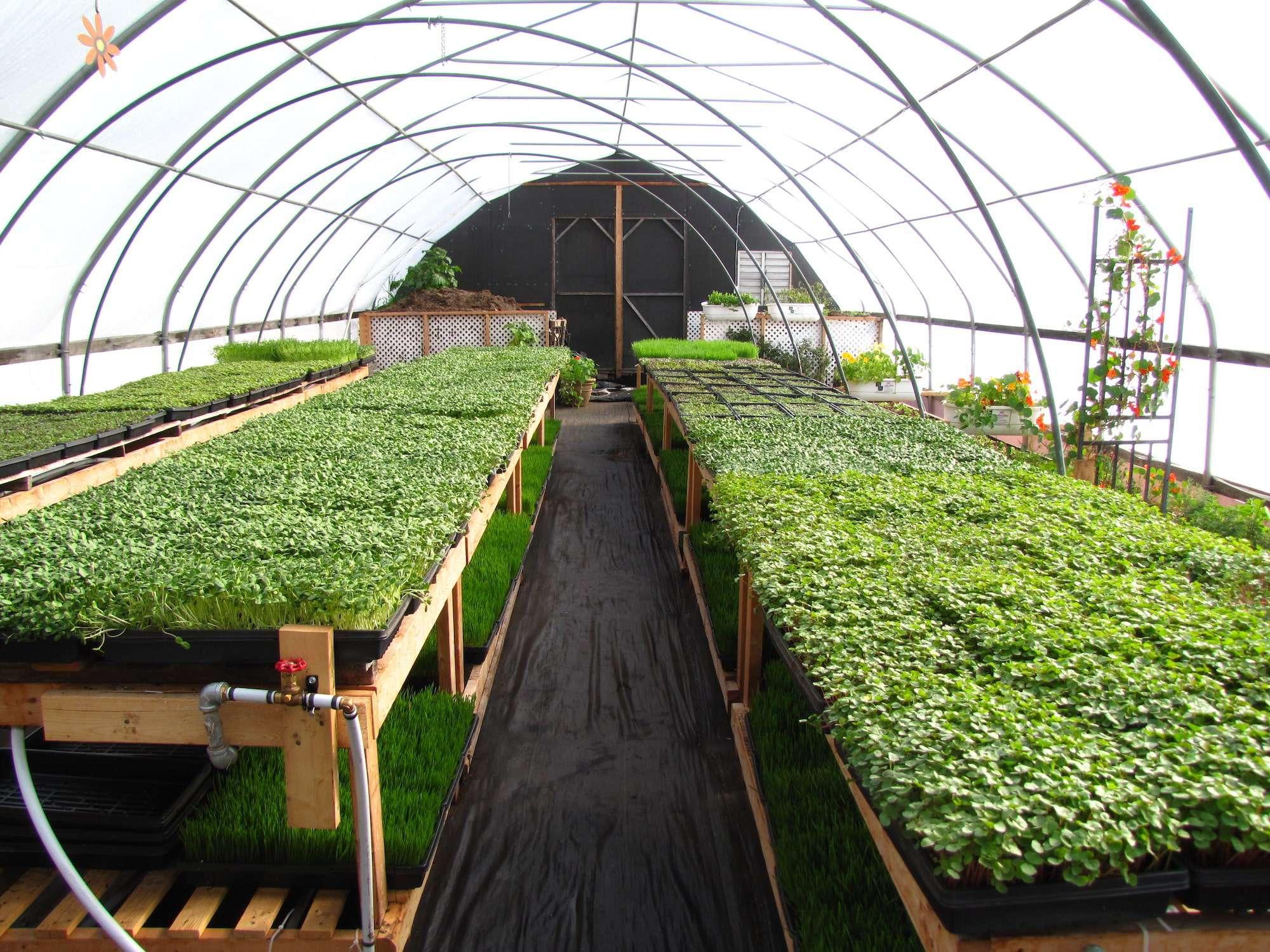 Essa Seedlings