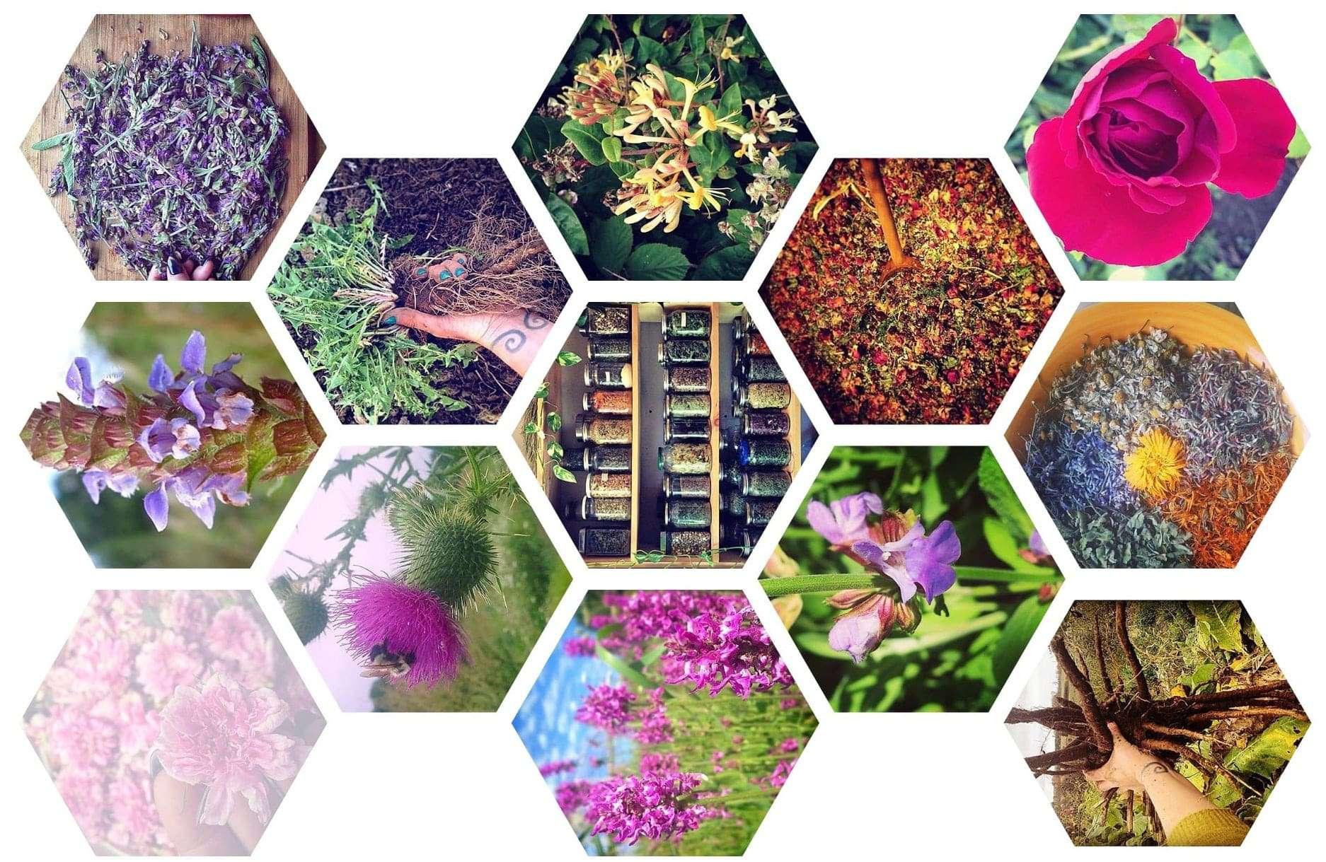 Catalyst Community Herbals