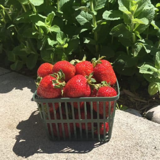 Strawberries Quart