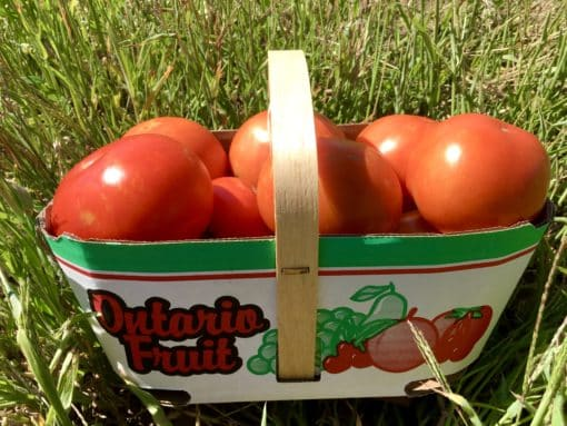 Tomato Basket Three litre basket of tomatoes (~5 lb)