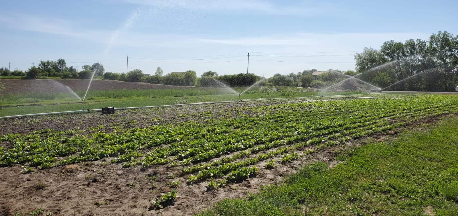 Kooner Farms