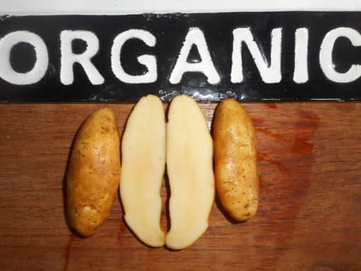 Austrian Crescent Fingerling-Organic-1 Quart Tan skin, yellow flesh. Waxy texture for roasting or salad-delicious