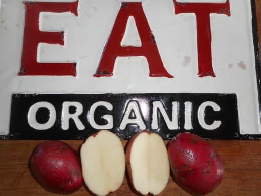 Potatoes Cheiftain-Organic-1 quart A red skinned heritage variety with white flesh, all purpose. Yummie.