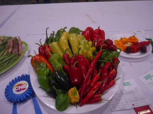 Hot Pepper seed Mixture - 25 seeds Grow 5 different HOT pepper varieties without buying 5 packs