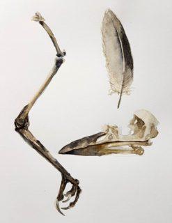 Farm Found: Bird Bones - Printed Card