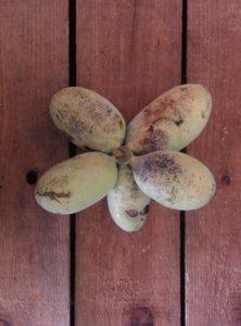 Pawpaw fruit 1
